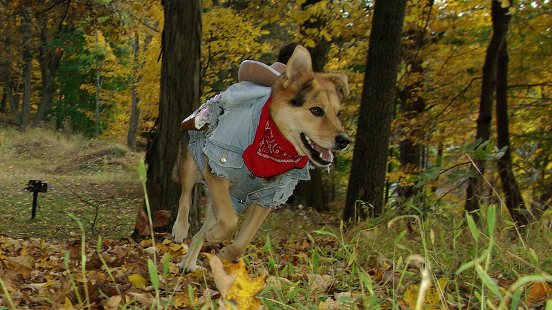 maddie; cowgirl costume halloween ossining