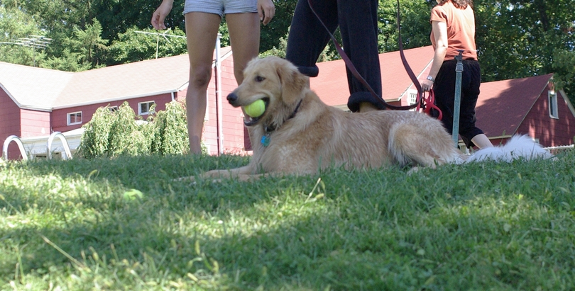 GREENBURGH DOG SWIM