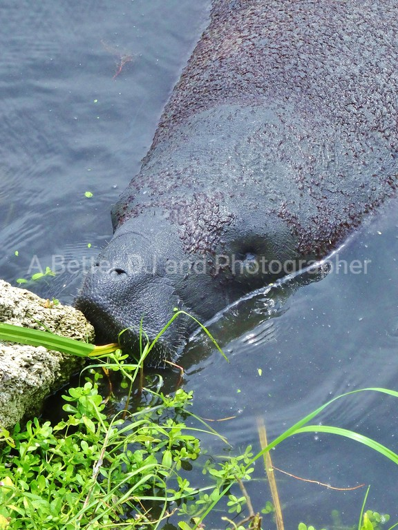 MANATEES KENNEDY POINT MARINA TITUSVILLE BREVARD COUNTY