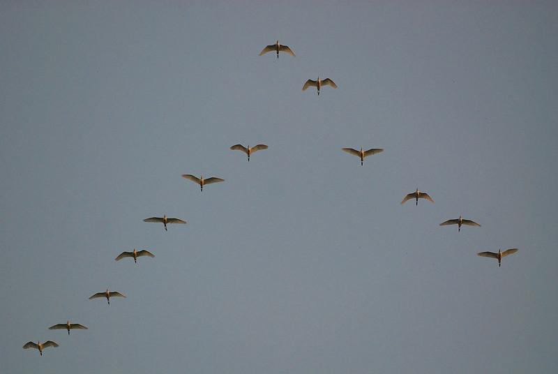 Egret Formation