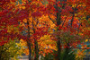 Autumn Colors 1