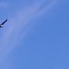 un águila encima