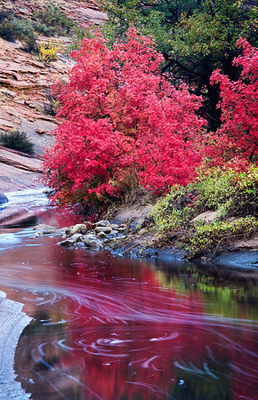 AUTUMN COLOR IN ZION