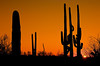 TUCSON SUNSET I
