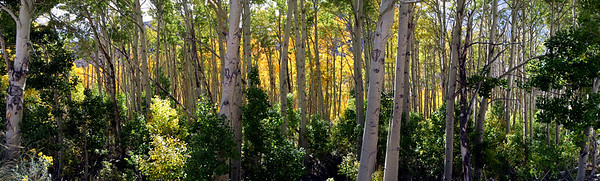 LUNDY CANYON ASPENS PANORAMA