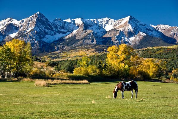 MOUNTAIN GRAZING
