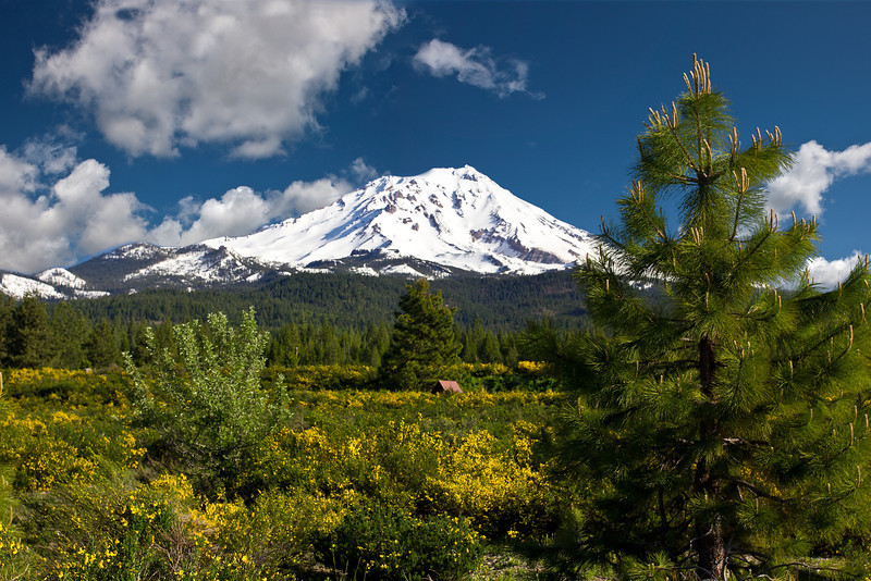 Mt. SHASTA LANDSCAPE