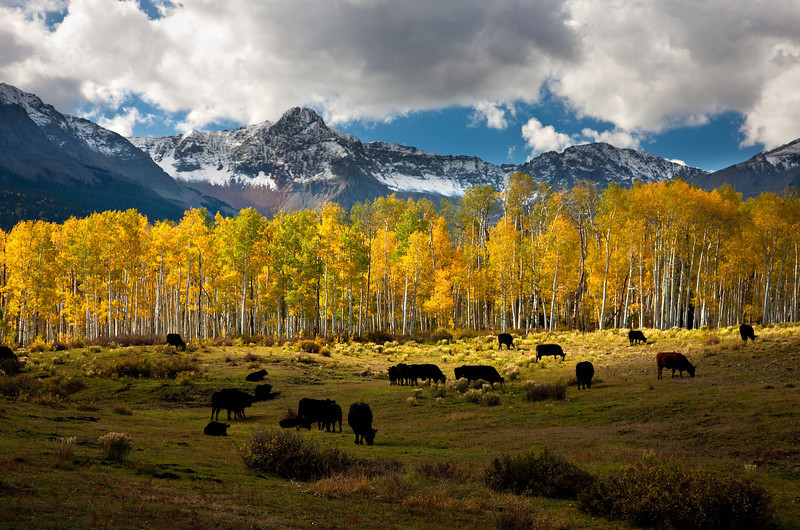 GRAZING IN THE ASPENS