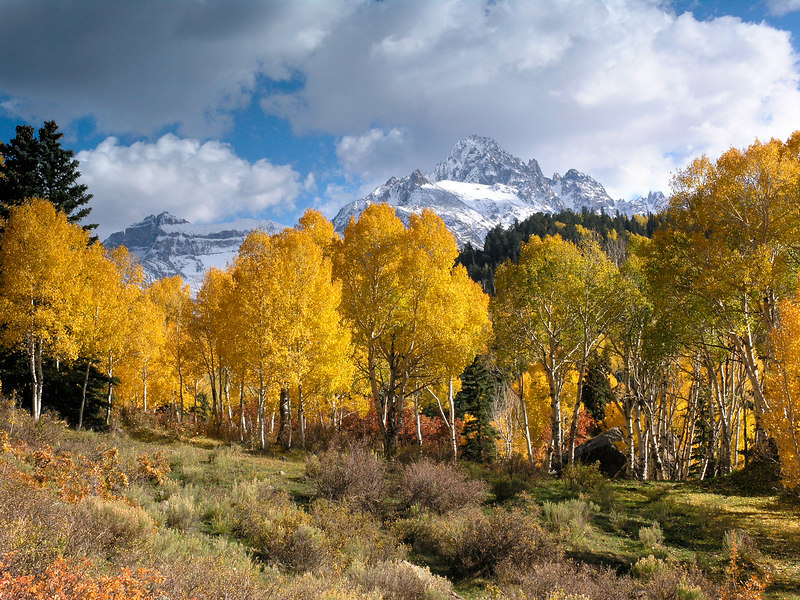 COLORS OF A MOUNTAIN AUTUMN I