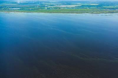 The algae bloom from Lake Okeechobee has grown since it was first measured in May. Environmentalists believe it now stretches more than 200 square miles. Aglae sits on top of Lake Okeechobee on Friday, July 8, 2016. South Florida Water Management District says the aglae bloom has dissipated some, following efforts to minimize impacts from the Lake O discharges.