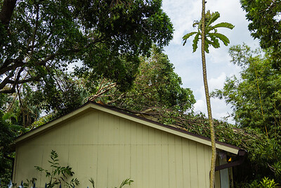 Snapped tree limbs sit on top of the Mounts Botanical Garden gift shop on Wednesday, September 13, 2017, after winds from Hurricane Irma passed through West Palm Beach on Sunday, September 10, 2017. (Joseph Forzano / The Palm Beach Post)