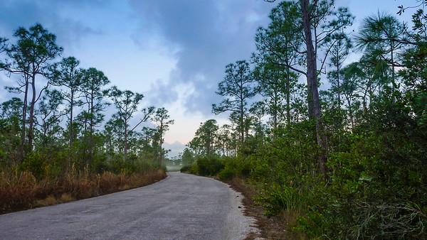 JW Corbett Wildlife Management Area (Joseph Forzano / The Palm Beach Post)