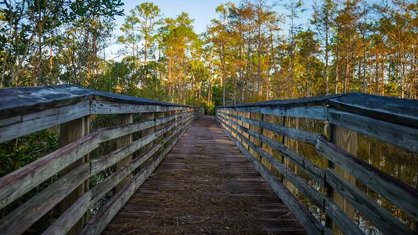 Hungryland Boardwalk and Trail (Joseph Forzano / The Palm Beach Post)