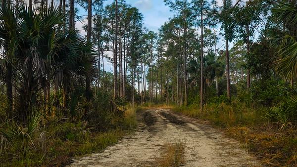 Royal Palm Beach Pines (Joseph Forzano / The Palm Beach Post)