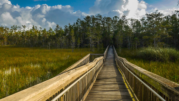Grassy Waters (Joseph Forzano / The Palm Beach Post)