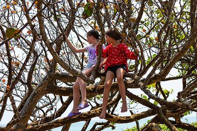 Madison Blomeke (left) and Renee Kovi sit in a sea grape tree near the beach in Jupiter on Friday, April 10. 2020. The Jupiter beaches are closed to the public due to the coronavirus pandemic. [JOSEPH FORZANO/palmbeachpost.com]
