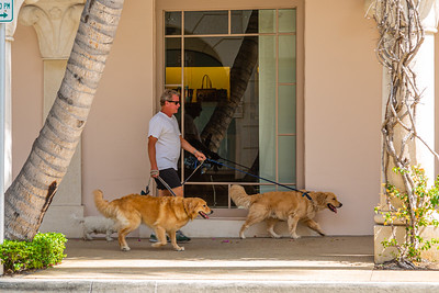 A man walks his three dogs past Neiman Marcus on Worth Avenue in Palm Beach, April 23, 2020. All of the retail stores on Worth Avenue are closed due to the coronavirus pandemic. [JOSEPH FORZANO/palmbeachdailynews.com]