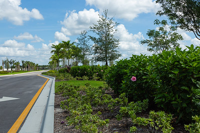 Some of the landscaping near the entrance to Avenir in Palm Beach Gardens, Tuesday, June 23, 2020. [JOSEPH FORZANO/palmbeachpost.com]