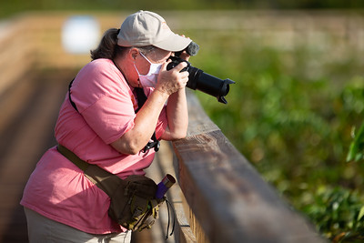 A woman shoots photographs from the boardwalk of Wakodahatchee Wetlands in Delray Beach, Thursday, October 1, 2020. The Wakodahatchee Wetlands boardwalk recently reopened to visitors - it had been shut down since the spring due to the coronavirus pandemic.  [JOSEPH FORZANO/palmbeachpost.com]