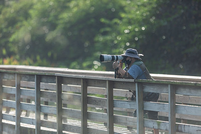 A man shoots photographs from the boardwalk of Wakodahatchee Wetlands in Delray Beach, Thursday, October 1, 2020. The Wakodahatchee Wetlands boardwalk recently reopened to visitors - it had been shut down since the spring due to the coronavirus pandemic.  [JOSEPH FORZANO/palmbeachpost.com]