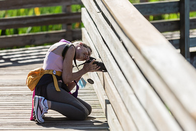 A woman crouches down on the boardwalk to photograph a flower at Green Cay Wetlands in Boynton Beach, Thursday, October 1, 2020. The Wakodahatchee Wetlands boardwalk recently reopened to visitors - it had been shut down since the spring due to the coronavirus pandemic.  [JOSEPH FORZANO/palmbeachpost.com]
