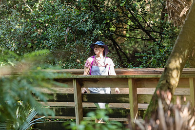 A woman walks along the boardwalk under the shade of trees in a hardwood hammock at Green Cay Wetlands in Boynton Beach, Thursday, October 1, 2020. The Green Cay Wetlands boardwalk recently reopened to visitors - it had been shut down since the spring due to the coronavirus pandemic.  [JOSEPH FORZANO/palmbeachpost.com]