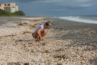 Kristen Moretti of West Palm Beach crouches amongst thousands of sea shells washed up on the beach at Carlin Park in Jupiter, looking for shark teeth, Monday, October 5, 2020. [JOSEPH FORZANO/palmbeachpost.com]