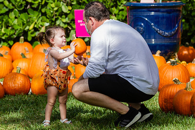 18-month-old Rowan Brammer of Jupiter hand her dad Condrad a  pumpkin at the The Royal Poinciana Plaza's Pop-Up Patch for Philanthropy benefitting Cancer Alliance of Help and Hope, Saturday, October 10, 2020. 100 percent of the funds raised from the pumpkin patch will be used to help local cancer patients with their rent/mortgage, utilities, car insurance, car payment and health insurance while undergoing treatment. It's estimated that there will be about 5,000 pumpkins over the duration of the event.(JOSEPH FORZANO / THE PALM BEACH DAILY NEWS)