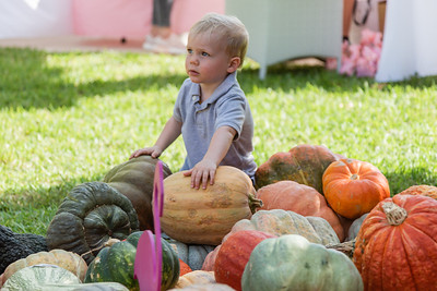 Hudson Thomas of West Palm Beach looks toward his mother Shaw, while picking his favorite pumpkin at the The Royal Poinciana Plaza's Pop-Up Patch for Philanthropy benefitting Cancer Alliance of Help and Hope, Saturday, October 10, 2020. 100 percent of the funds raised from the pumpkin patch will be used to help local cancer patients with their rent/mortgage, utilities, car insurance, car payment and health insurance while undergoing treatment. It's estimated that there will be about 5,000 pumpkins over the duration of the event.(JOSEPH FORZANO / THE PALM BEACH DAILY NEWS)