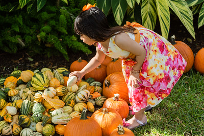 Bella Carmona of West Palm Beach picks out her favorite pumpkin at the The Royal Poinciana Plaza's Pop-Up Patch for Philanthropy benefitting Cancer Alliance of Help and Hope, Saturday, October 10, 2020. 100 percent of the funds raised from the pumpkin patch will be used to help local cancer patients with their rent/mortgage, utilities, car insurance, car payment and health insurance while undergoing treatment. It's estimated that there will be about 5,000 pumpkins over the duration of the event.(JOSEPH FORZANO / THE PALM BEACH DAILY NEWS)