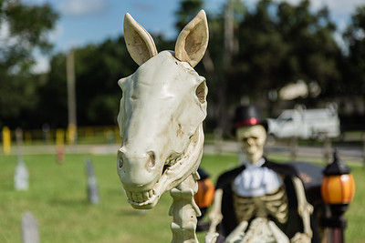 A funeral hearse, drawn by a skeletal horse and driven by a skeleton at the Wellington Drive-Thru Creepy Crawl at Village Park, Wednesday, October 14, 2020. The Creepy Crawl will take place on Saturday, October 17 starting at 6 p.m. Visitors will drive their cars through Village Park in one direction and pass a series of scare areas, including an area designed for older kids with more intense scares. (JOSEPH FORZANO / THE PALM BEACH POST)