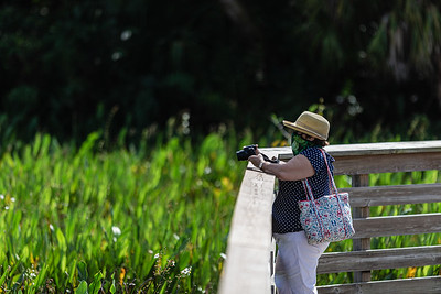 A woman stops to make a photograph along the 1 mile boardwalk loop at Green Cay Nature Center and Wetlands in Boynton Beach, Thursday, November 5, 2020. Due to COVID-19 restrictions, everyone must wear a mask if they can't social distance, and the boardwalk is one direction only. (JOSEPH FORZANO / THE PALM BEACH POST)