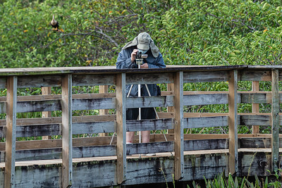 A man shoots video from the boardwalk of Wakodahatchee Wetlands in Delray Beach, Friday, November 6, 2020. Due to COVID-19 restrictions, everyone must wear a mask if they can't social distance, and the boardwalk is one direction only. (JOSEPH FORZANO / THE PALM BEACH POST)