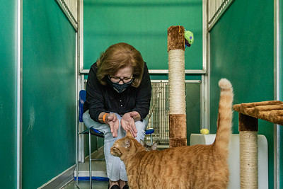 Palm Beach County Animal Care and Control Director Dianne Sauve sits in a converted dog kennel and plays with Kiwi, one of the cats that are available for adoption at the West Palm Beach facility, Thursday, November 12, 2020. There is an all time low number of dogs in the shelter and staff is converting the empty kennels into rooms for their cats, giving the felines more space to move around.  (JOSEPH FORZANO / THE PALM BEACH POST)
