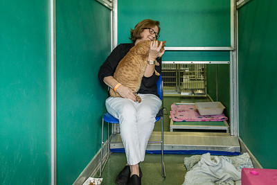 Palm Beach County Animal Care and Control Director Dianne Sauve sits in a converted dog kennel and plays with Sonnie, one of the cats that are available for adoption at the West Palm Beach facility, Thursday, November 12, 2020. There is an all time low number of dogs in the shelter and staff is converting the empty kennels into rooms for their cats, giving the felines more space to move around.  (JOSEPH FORZANO / THE PALM BEACH POST)