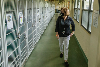 Palm Beach County Animal Care and Control Director Dianne Sauve inspects the news cat kennels that are being converted from dog kennels at the West Palm Beach facility, Thursday, November 12, 2020. There is an all time low number of dogs in the shelter and staff is converting the empty kennels into rooms for their cats, giving the felines more space to move around.  (JOSEPH FORZANO / THE PALM BEACH POST)