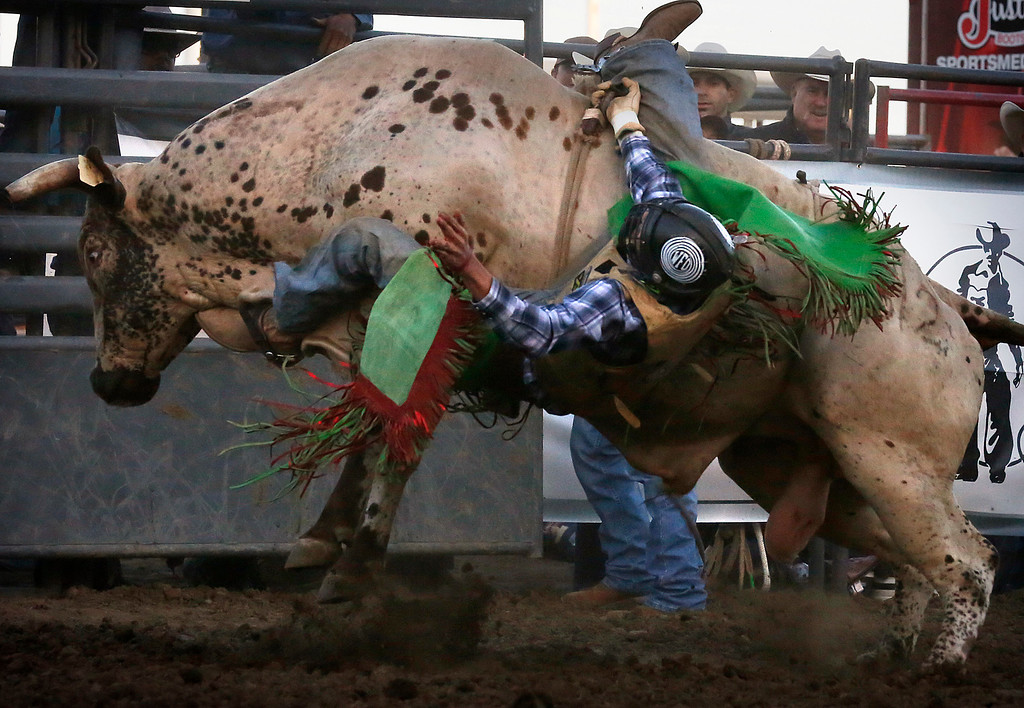 . Brian Remmer is ejected by his bull while competing in the Professional Bull Riding event at the Salinas Rodeo grounds on Wednesday July 19, 2017. (David Royal/Herald Correspondent)