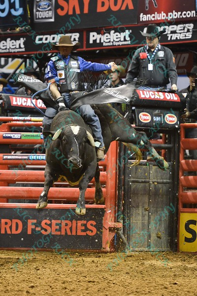 Bull COWTOWN ROCK jumps high in the air in an effort to buck Rider EDUARDO APARECIDO  during the final round at the Professional Bull Riders Built Ford Tough Series, Bass Pro Chute Out presented by Cooper Tires at the Scottrade Center in St. Louis, Missouri