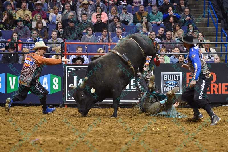 Bullfighter FRANK NEWSOM (orange) tries to distract bull WESTERN WAY while Rider KASEY HAYES  hits the ground during the first round at the Professional Bull Riders Built Ford Tough Series, Bass Pro Chute Out presented by Cooper Tires at the Scottrade Center in St. Louis, Missouri
