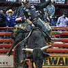 Rider VALDIRON DE OLIVEIRA with bull KING BUCK during the third round at the Professional Bull Riders Built Ford Tough Series, Bass Pro Chute Out presented by Cooper Tires at the Scottrade Center in St. Louis, Missouri