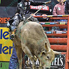Rider MARCO EGUCHI on bull TAHONTA'S MAGIC during the final round at the Professional Bull Riders Built Ford Tough Series, Bass Pro Chute Out presented by Cooper Tires at the Scottrade Center in St. Louis, Missouri