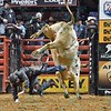 Rider ZANE LAMBERT  hits the ground hard after falling off bull FOR SALE during the second round at the Professional Bull Riders Built Ford Tough Series presented by Cooper Tires at the Scottrade Center in St. Louis, Missouri