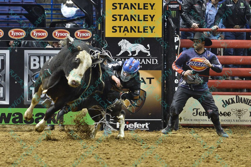 Rider MIKE LEE and bull COMFORTABLY NUMB during the third round at the Professional Bull Riders Built Ford Tough Series, Bass Pro Chute Out presented by Cooper Tires at the Scottrade Center in St. Louis, Missouri