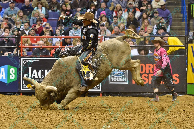 bull TAHONTA'S MAGIC digs his nose into the ground in an attempt to buck Rider JOAO RICARDO VIEIRA during the second round at the Professional Bull Riders Built Ford Tough Series, Bass Pro Chute Out presented by Cooper Tires at the Scottrade Center in St. Louis, Missouri