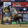 Rider GAGE GAY with bull COOPER TIRES BROWN SUGAR during the third round at the Professional Bull Riders Built Ford Tough Series, Bass Pro Chute Out presented by Cooper Tires at the Scottrade Center in St. Louis, Missouri