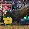 Bull OPEN SEASON chases Bullfighter FRANK NEWSOM (orange)during the first round at the Professional Bull Riders Built Ford Tough Series, Chute Out presented by Cooper Tires at the Scottrade Center in St. Louis, Missouri