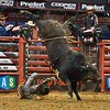 Rider CHASE OUTLAW  falls hard after being bucked off of bull CRYSTAL PISTOL during the second round at the Professional Bull Riders Built Ford Tough Series, Bass Pro Chute Out presented by Cooper Tires at the Scottrade Center in St. Louis, Missouri