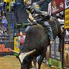 Rider SILVANO ALVES  on bull WICKED during the second round at the Professional Bull Riders Built Ford Tough Series presented by Cooper Tires at the Scottrade Center in St. Louis, Missouri