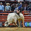 Rider GUILHERME MARCHI completes his successful ride on bull WHO DEY which earned him the championship during the championship round at the Professional Bull Riders Built Ford Tough Series, Bass Pro Chute Out presented by Cooper Tires at the Scottrade Center in St. Louis, Missouri