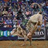 Rider J.B. MAUNEY on bull PISTOL PETE during the first round at the Professional Bull Riders Built Ford Tough Series, Bass Pro Chute Out presented by Cooper Tires at the Scottrade Center in St. Louis, Missouri